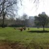 イギリス:ロンドン・セント・ジェームズ・パークSt. James's Park