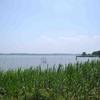 「涸沼の生きもの観察会」を取材しました。(平成27年7月12日)