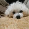 通院日。目に見える愛犬の老い・・・