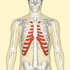 肋軟骨炎の原因とその診断
