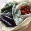 日本の野菜を頂きました!