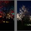 梅が咲きました(7)~地域振興のためのスマホ写真活用(22)