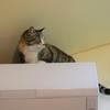 猫男子はカンがいい&サイズは大事