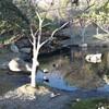 1月5日(日)も「第46回アース・エコ・フェア浜松城公園2020」