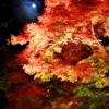 幻想的で幽玄の世界【等彌神社「献灯祭」&「紅葉ライトアップ」】(桜井市)