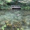 夏の思い出 イタグレたちとモネの池へ
