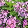 もりやま芦刈園の紫陽花とOKAKI守山店のランチ