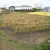 2019年10月20日、稲の天日干しに行ってきました。