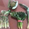 【たべもののこと】生活クラブの無農薬野菜『やさいBOX』のミニセット 2017年1月(1週〜4週)に届いたお野菜たち。(野菜ボックス)