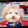 人面犬 キモーイ---