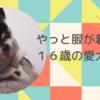おじいちゃん犬の日常~16年の歳月をかけて服嫌いを克服した話~
