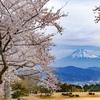 桜探訪 東海エリア編