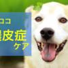 犬の膿皮症、自宅でできるケアを徹底解説