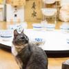 お相撲さん部屋で飼われている2匹のネコ