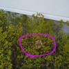 蜂の巣 駆除
