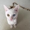 我が家の猫さん③シーツさん。