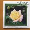 癒しのスポット「生田緑地ばら苑」に行ってきました
