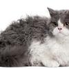 「猫旅リポート」ナナ役の猫の種類や特徴は?