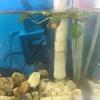金魚の水槽とメダカの100均飼育かご アクアリウム