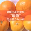 【甘平】愛媛出身の僕が最強だと思うみかんを徹底紹介!