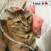 お客様のお姿をご紹介(ΦωΦ): 猫用ミニクッション★イチゴ柄・猫様のもみもみふみふみに