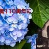 【桜桃忌2019】太宰治 生誕110周年によせて