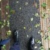雨を楽しむガラスレザー♪革靴選びは慎重に…