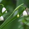 春分の日の庭の花