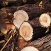 家の柱に使っている木が育つ山。伐り出すところと製材工場を見に行こう~~