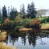 紅葉を探しに☆秋の神仙沼へ