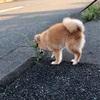 【犬のトイレ時の不思議な行動】~くるくる回る~