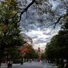 【大学】晩秋の同志社大学今出川キャンパス