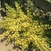 挿し木達の成長