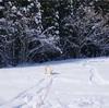 雪山シーズン終盤戦