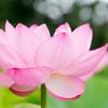 仏教の考える幸せって?(スッタニパータより)