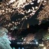 そろそろ見納め!千鳥ヶ淵の夜桜&朝桜