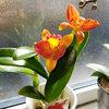 可愛いキッチンの花♪