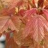 ガーデニング大国イギリスで人気の庭木20選ー後編ー