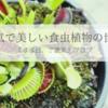 健気で美しい『食中植物の世界』*不思議でユニークな特性と逞しい食虫植物から学ぶ7つの教訓