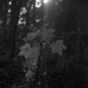 森の中でRolleiflex