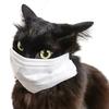 「ネコにもマスクをつけさせたい」~無症状無自覚の感染者にマスクを着けさせる方法