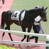 出走予定馬及びアステリアの近況と奮闘のオーシャンスケイプ