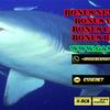 Keseruan Dalam Bermain Game Tembak Ikan Online Joker123