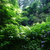 鎌倉の集藍