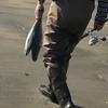 ツバス、ハマチにシーバスとマゴチ!てんこ盛りの、伊勢湾サーフ・ショアジギング