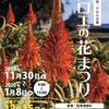 11月28日(土)~2021年1月7日(木)の期間下田でアロエの花まつり開催予定