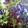セントルシアの旅⑤:熱帯植物−食用