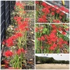今日は、秋のお彼岸(秋彼岸)入りです。( ◠‿◠ ) 季節通りにお花が咲くって感動です。(''_'') そもそも「お彼岸」って何だろうか?