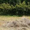 畑の草刈りのちお仕事。