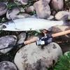 #昔釣ったサクラマス 九頭竜川で初めて釣ったサクラマス